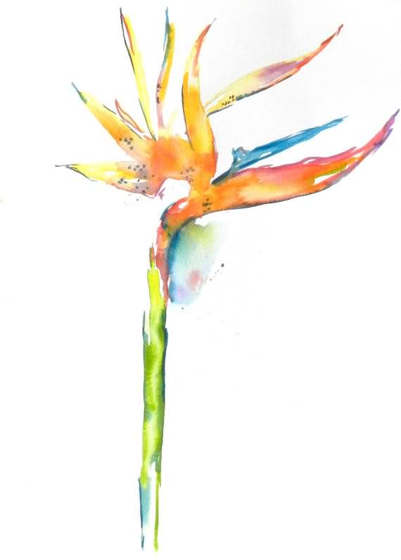 Awesome Bird Of Paradise Flower Sketch With White Background