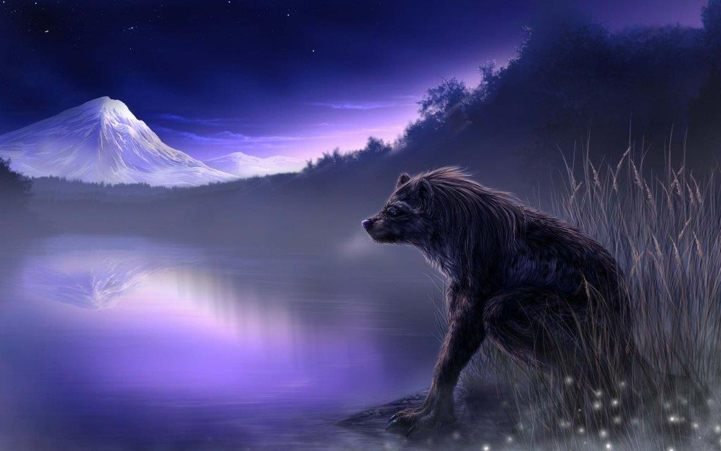 Awesome Grizzly Bear At Night Full Hd Wallpaper