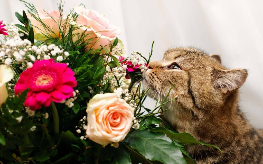 Beautiful Cat With Different Beautiful Flowers full HD wallpaper