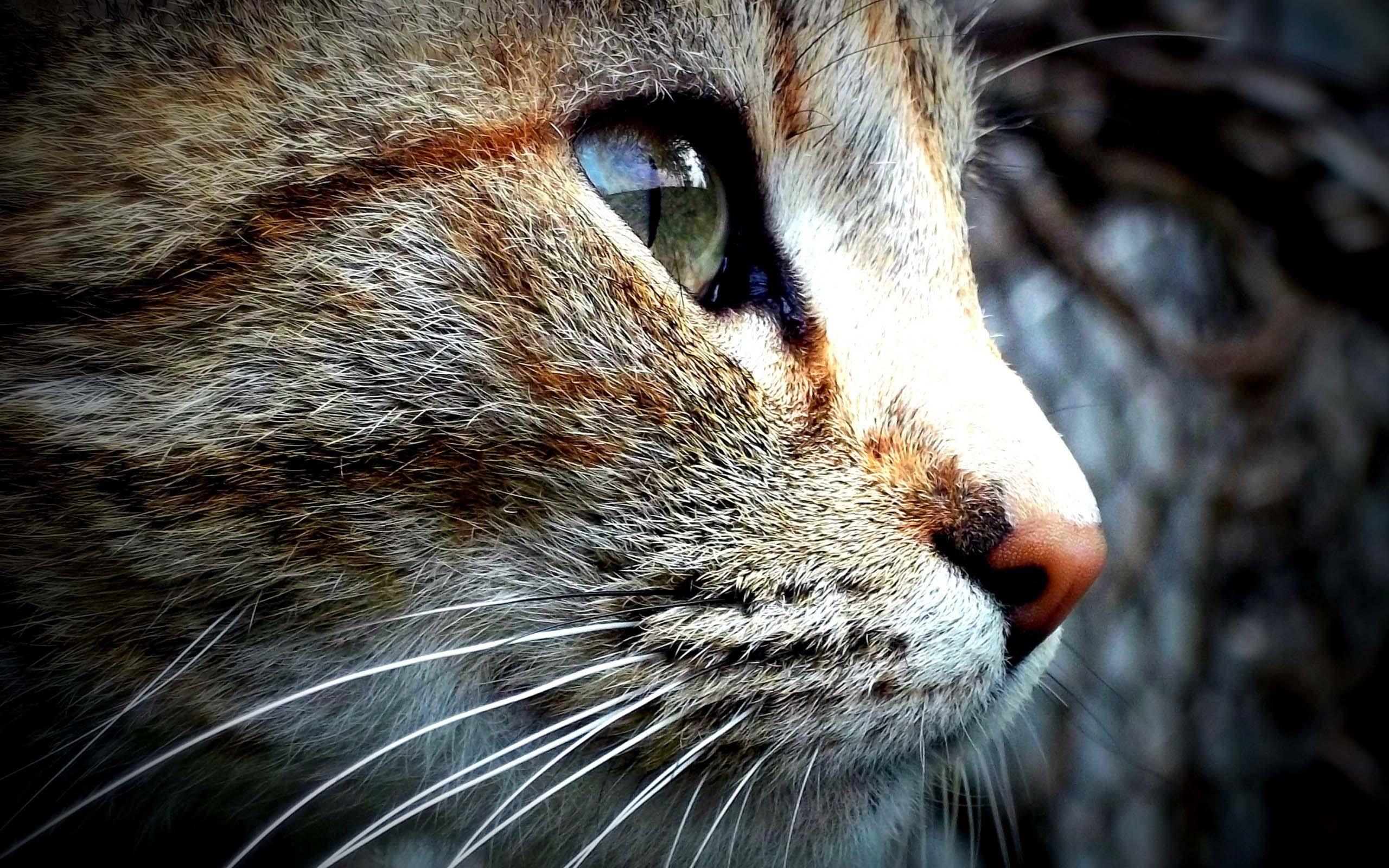 beautiful-eyes-of-a-nice-cat-full-hd-wallpaper