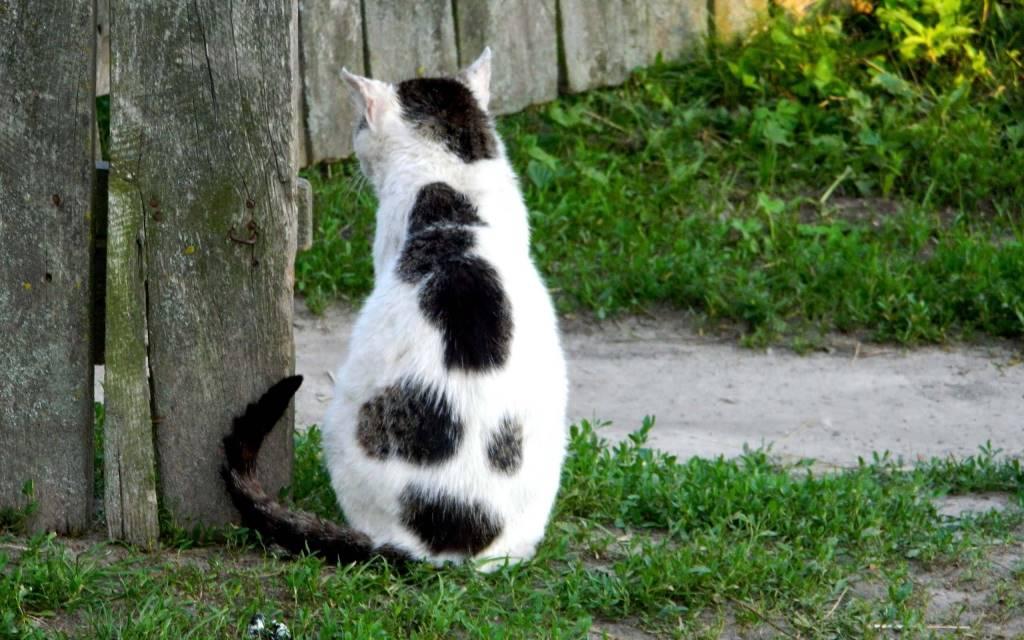 Beautiful Look From Behind A Wonderful Cat full HD wallpaper