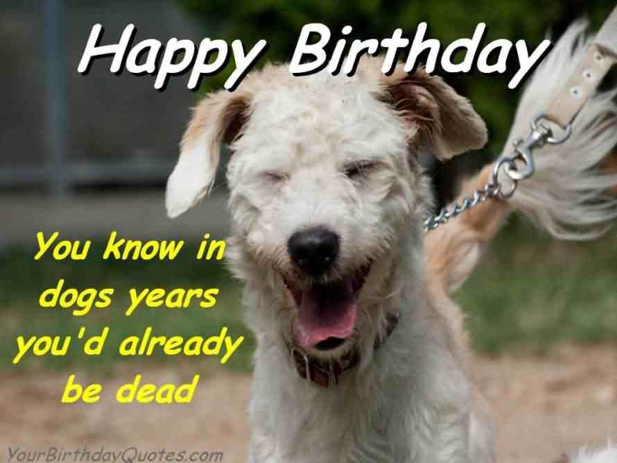 Birthday Dog Funny Meme