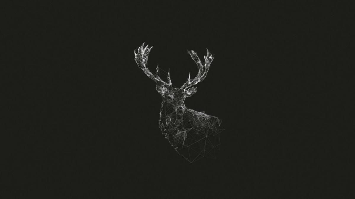 Black And White Deer 4k Wallpaper