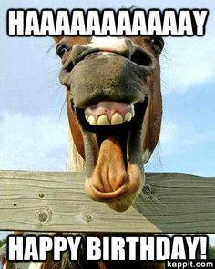 Camel Funny Happy Birthday Meme