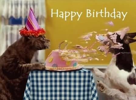 Cat & Dog Funny Happy Birthday Wishes Meme Birthday Wishes