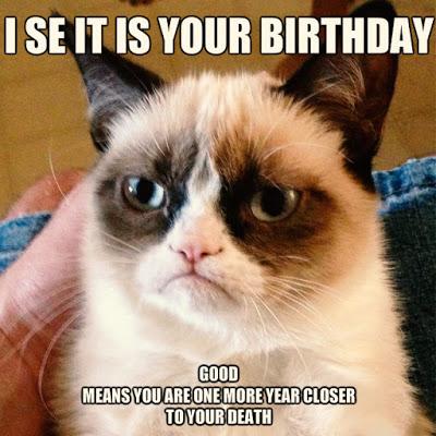 Cat Funny Happy Birthday Meme Wishes Image
