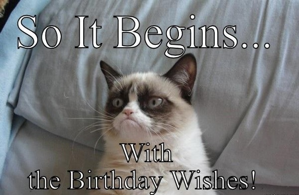 Cat Funny Wishes So It Begins With The Birthday Wishes