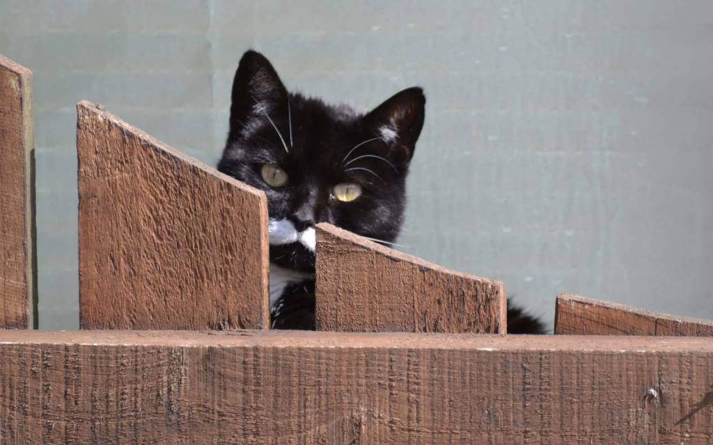 Cute Black Cat Behind The Barrier Full Hd Wallpaper