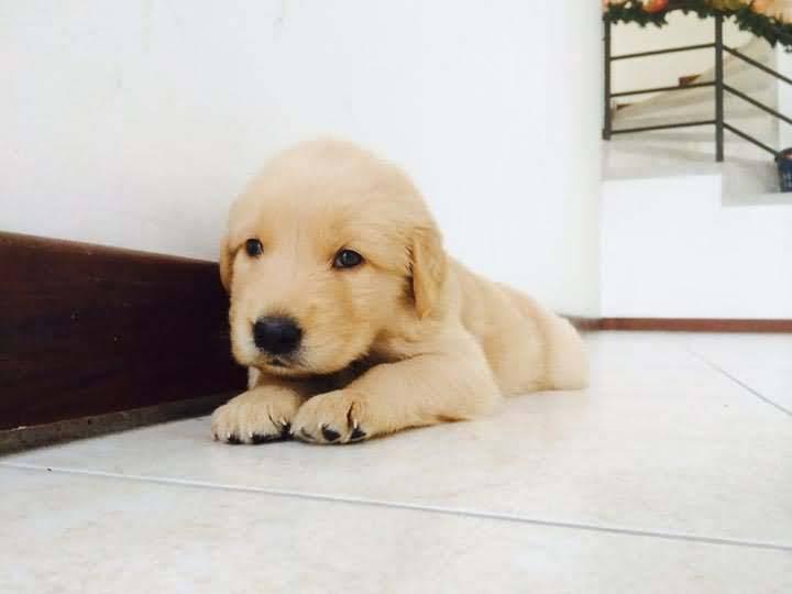 Cute Dog But It Seems Sad Full Hd Wallpaper