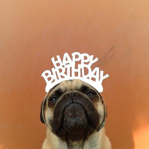 Cute Dog Say Happy Birthday