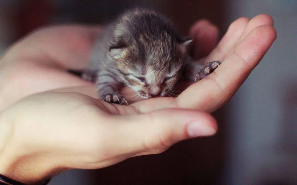 Cutest Cute Kitten On The Big Hand 4K Wallpaper