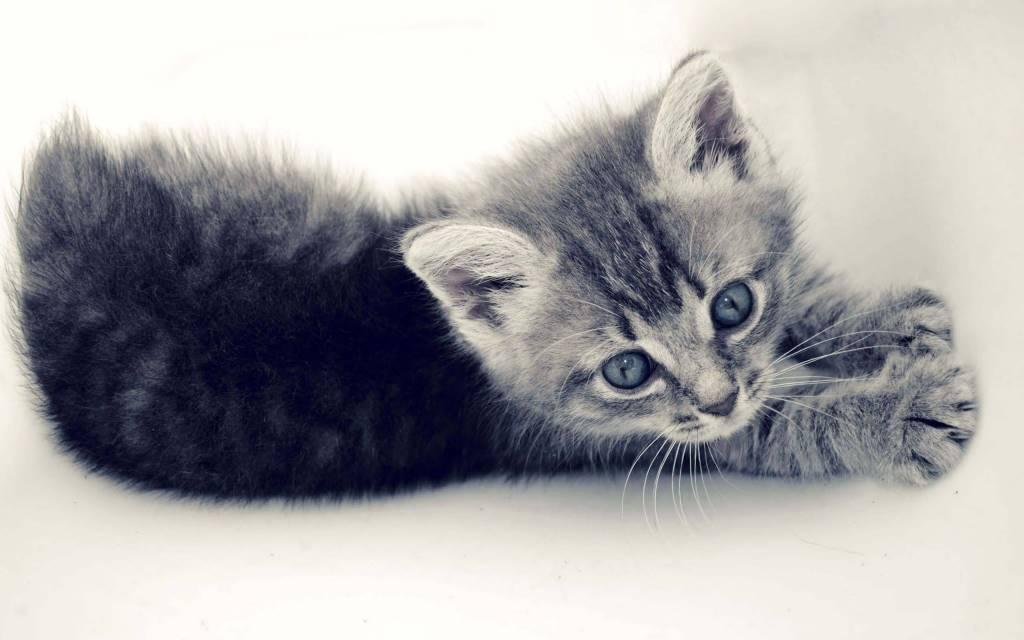 Cutest Small Cat Play HD Wallpaper