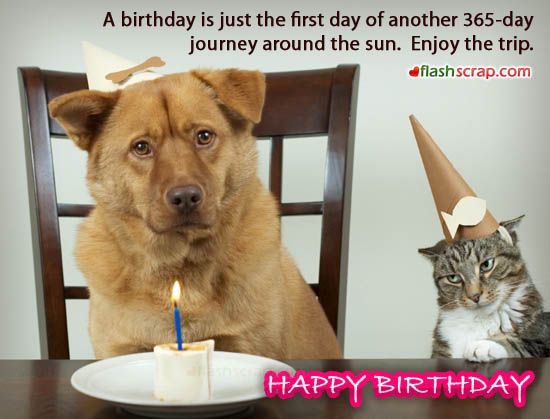 Dog & Cat Wishes Happy Birthday