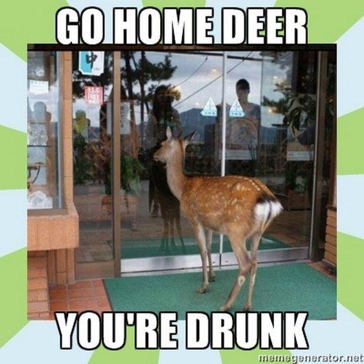 Drunk Meme Go Home Deer Youre Drunk