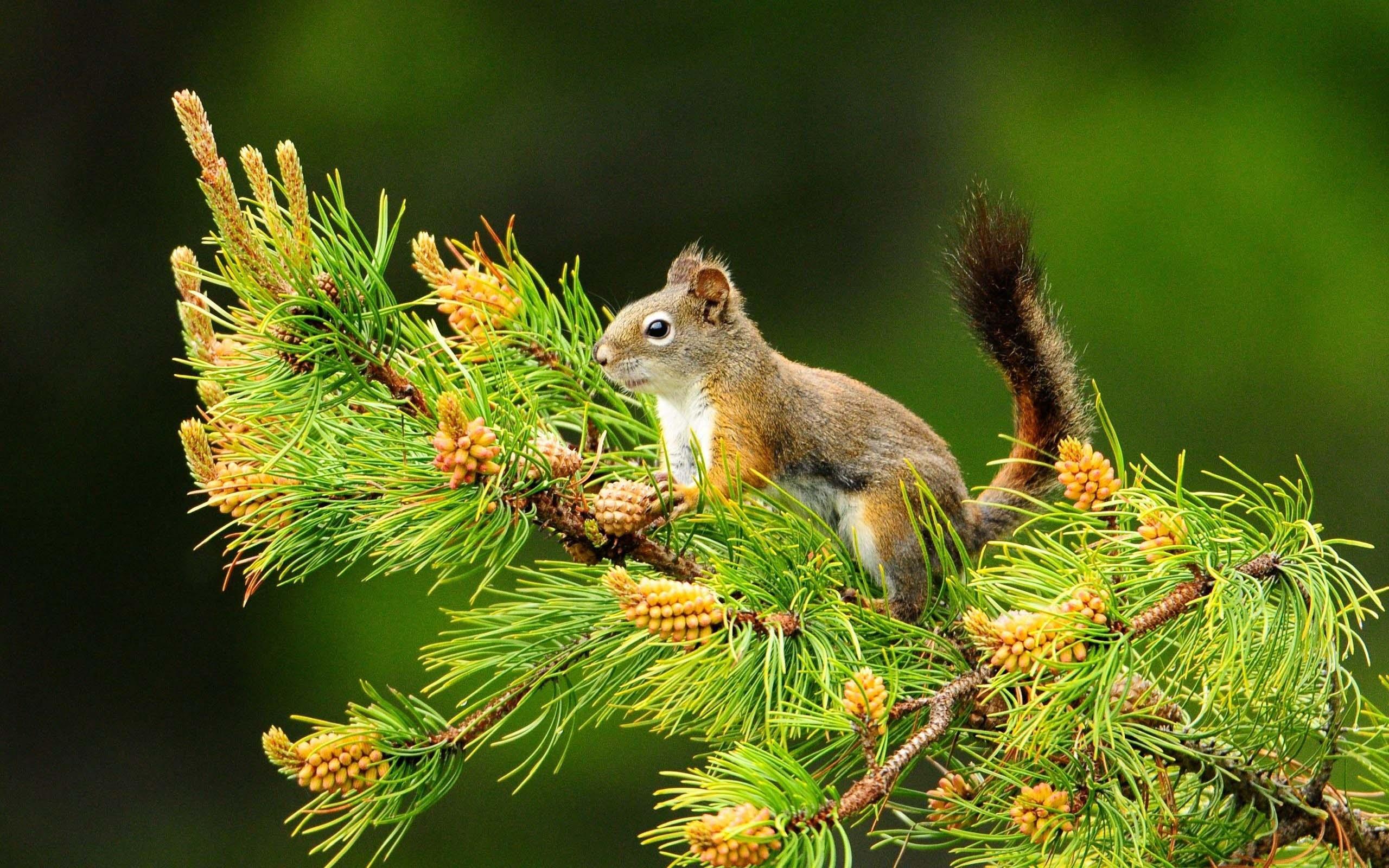 fantastic-squirrel-4k-wallpaper