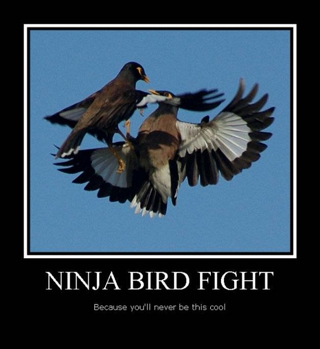 Funny Ninja Memes Ninja Bird Fight Graphic