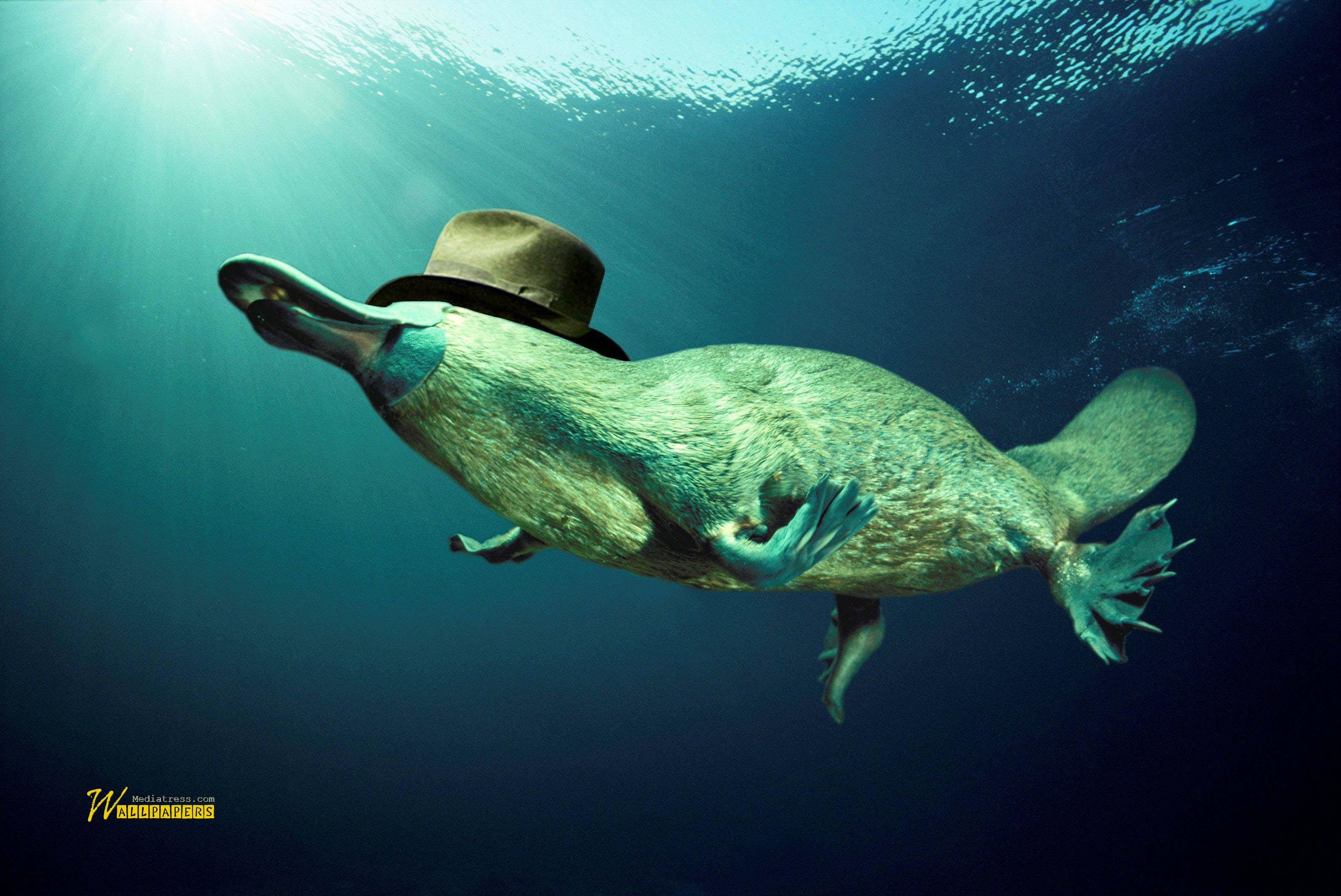 funny-sea-creature-underwater-full-hd-walpaper