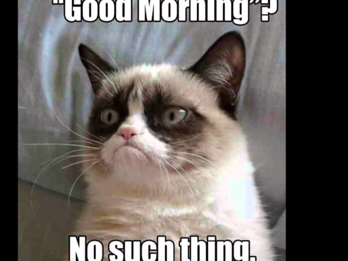 30 Funniest Grumpy Cat Memes Images & Pictures Stock