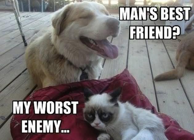 Grumpy Cat Meme Mans Best Friend My Wrost Enemy Grumpy Cat Memes