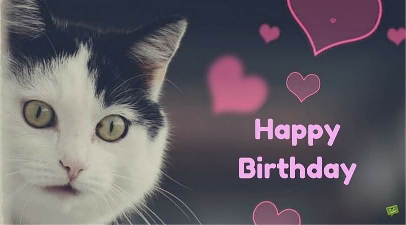 Happy Birthday Wishes By Cat Wallpaper