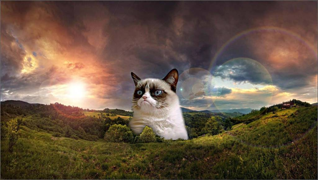 Incredible Massive Cat At Twilight HD 4K Wallpaper