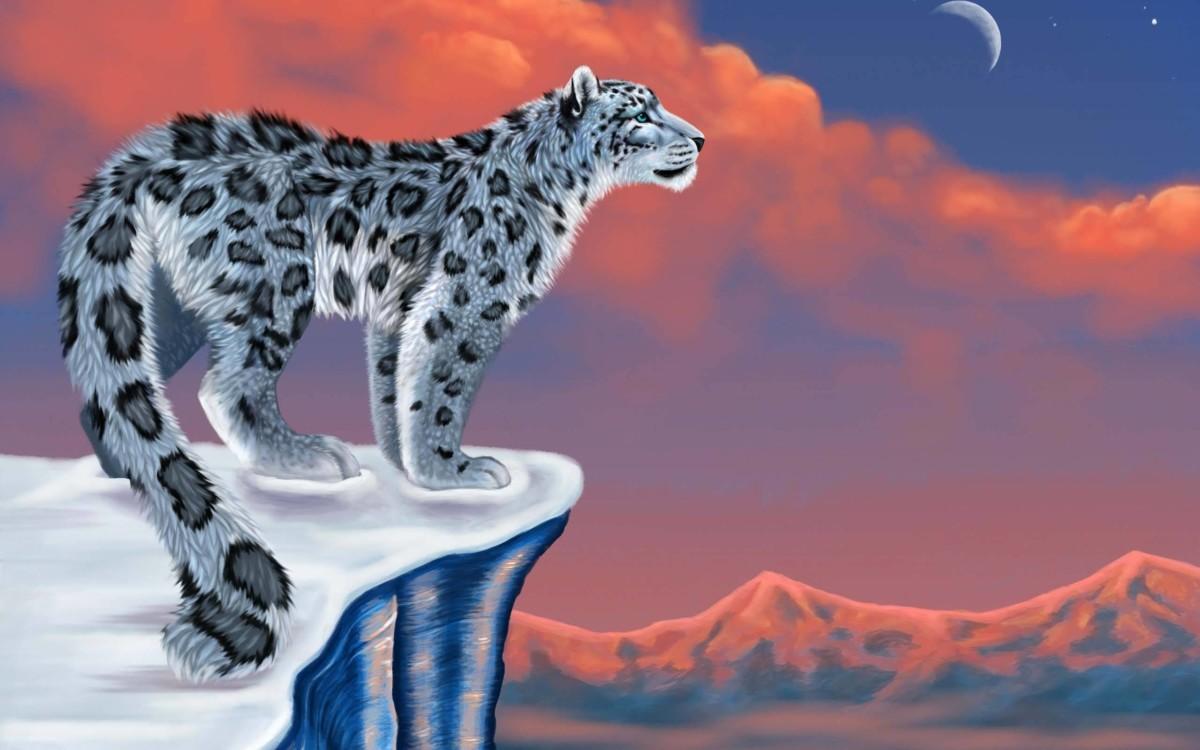 Leopard Fabulous Design 4k Wallpaper