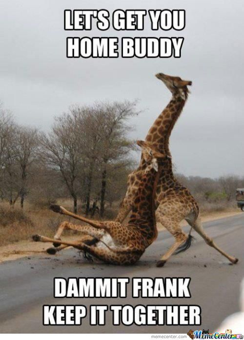 Lets Get You Home Buddy Dammit Frank Keep It Together Drunk Meme