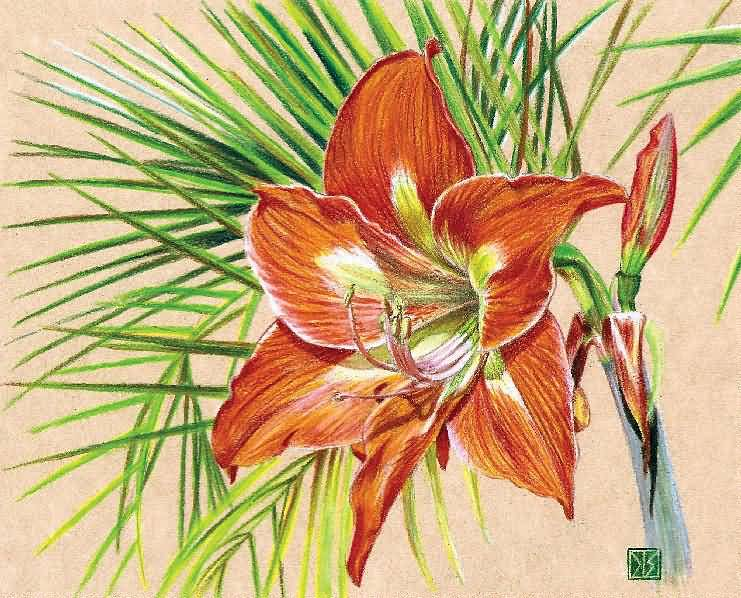 Lovely Amaryllis Flower Sketch With Green Leafs