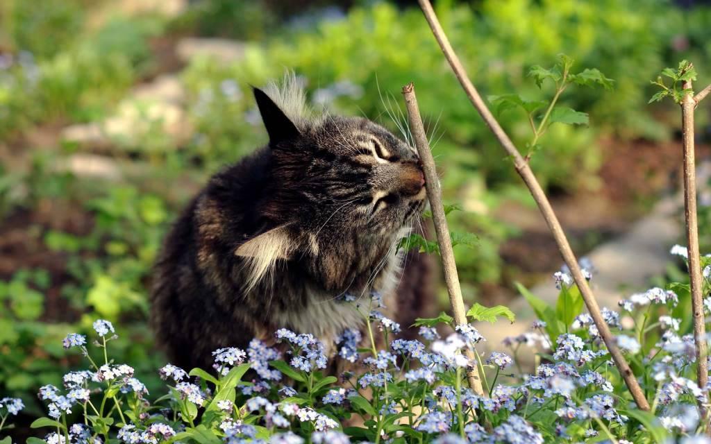 Lovely Cat In the Home Garden full HD wallpaper