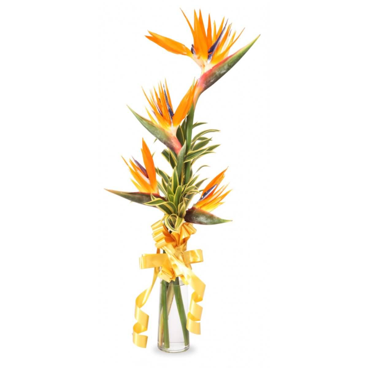Mind Blowing Bird Of Paradise Flower For Home Decoration