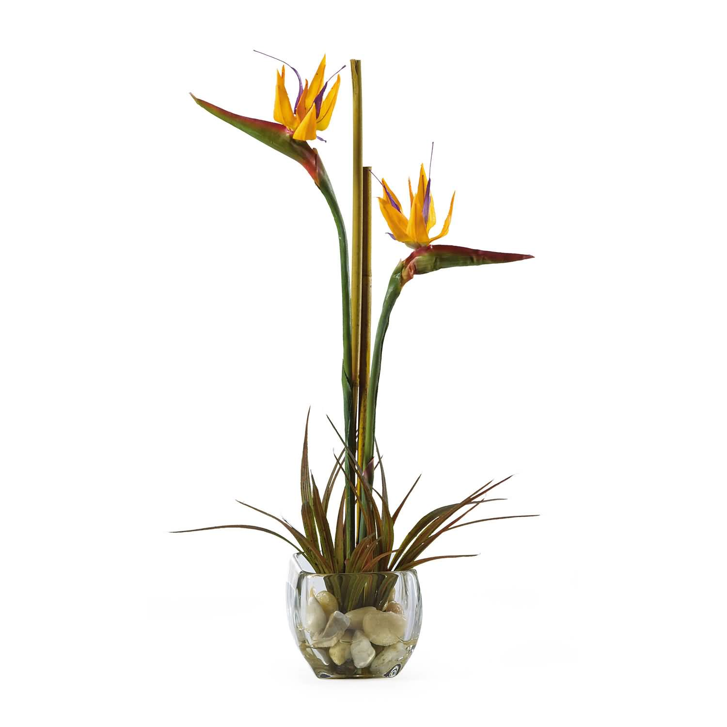 Mind Blowing Bird Of Paradise Flower Plant For Home Decoration