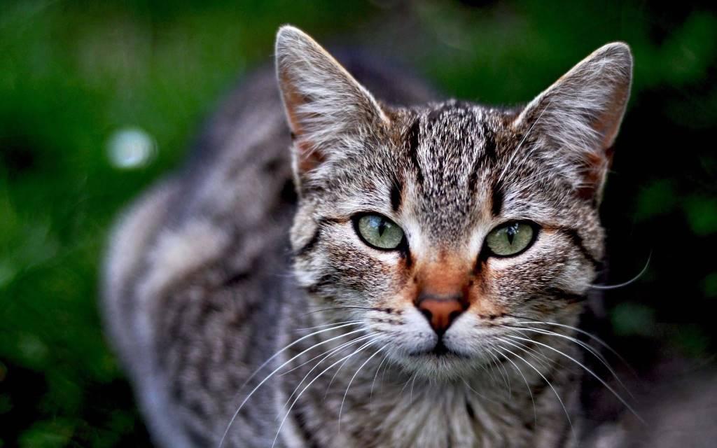 Most Amazing Fantastic Cat Seen A Camera Full Hd Wallpaper