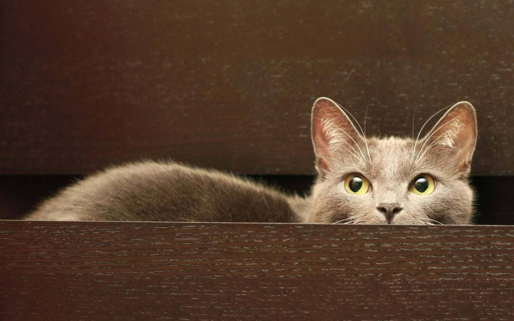 Most Amazing Nice Cat In The Drawer HD 4K Wallpaper