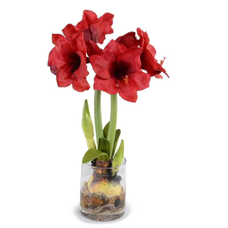Most Beautiful Red Amaryllis Flower For Decoration