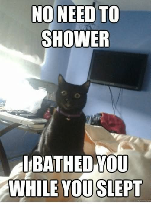 No Need To Shower I Bathed You While You Slept Grumpy Cat Meme