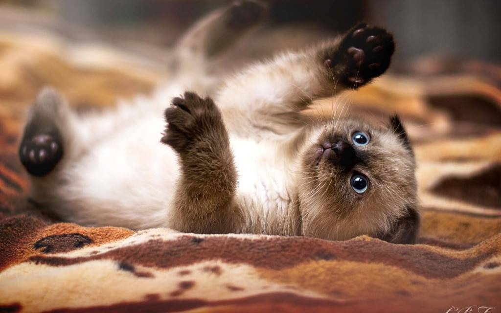 Pretty Play And Fun With Pet On Bed 4K Wallpaper