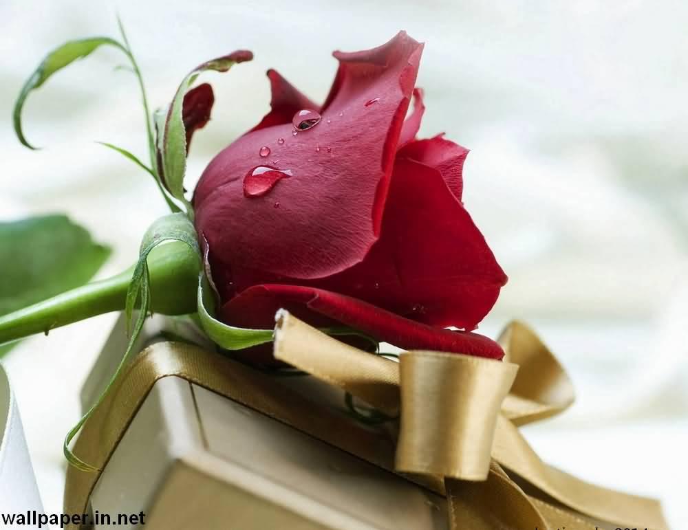 Romantic Red Rose Happy Birthday Wishes For Boyfriend