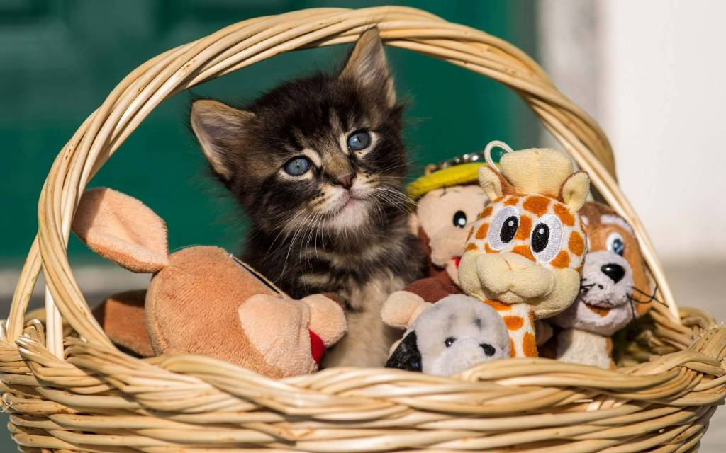 Simple Cat With His Toys In The Basket Full Hd Wallpaper