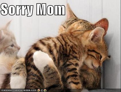 Sorry Mom Cats Image