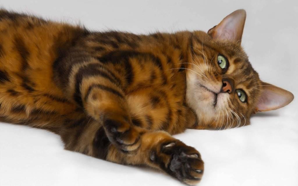 Stunning Sleeping Cat With A Green Eyes 4K Wallpaper