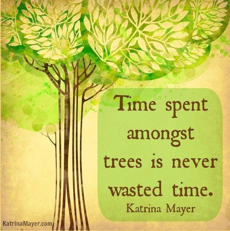Time spent amongst trees is never wasted Katrina Mayer