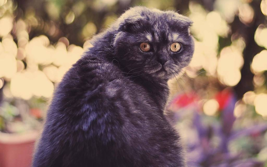 Unique Cat But Scary Looking Behing Full Hd Wallpaper