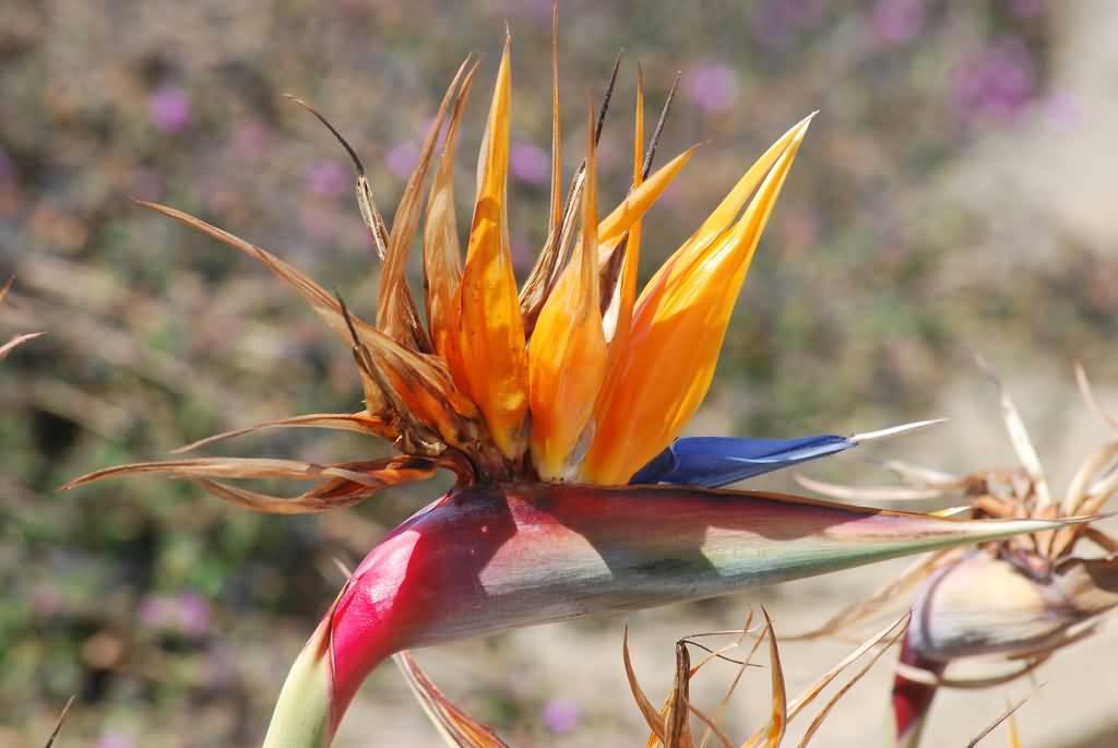 Unique Orange Bird Of Paradise Flower Wallpaper