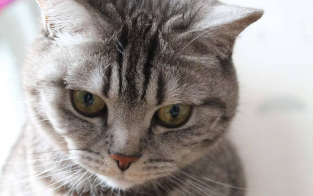 Very Beautiful Eyes Of Wonderful Cat Wallpaper HD 4K Wallpaper
