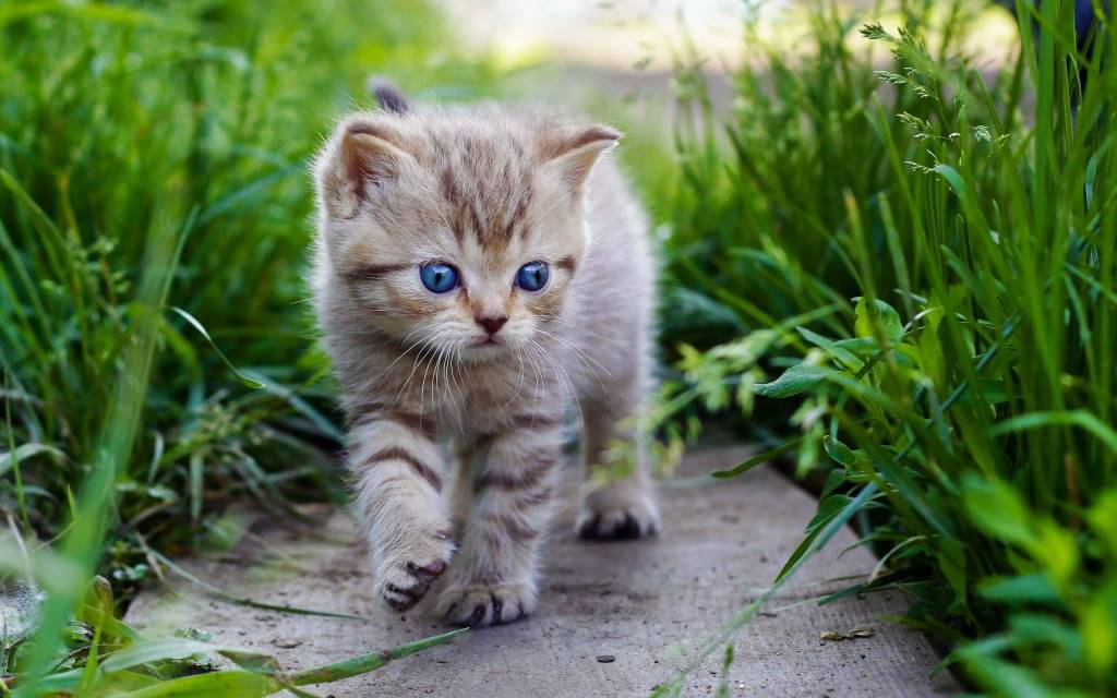 Very Little Beautiful Cat Walks Between Plants Full Hd Wallpaper