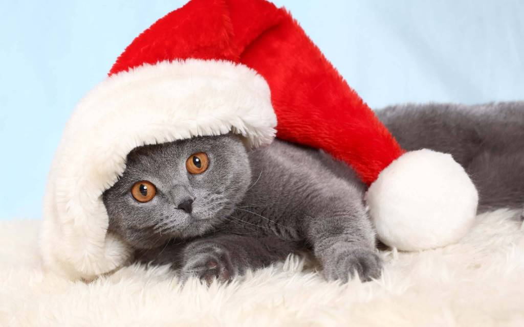 Very Nice Cat Wearing A Red Hat 4K Wallpaper