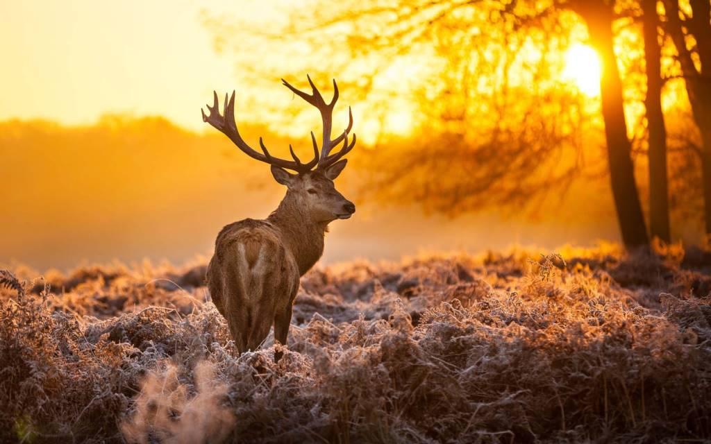 8 Amazing Wild Dear Animal HD Wallpaper