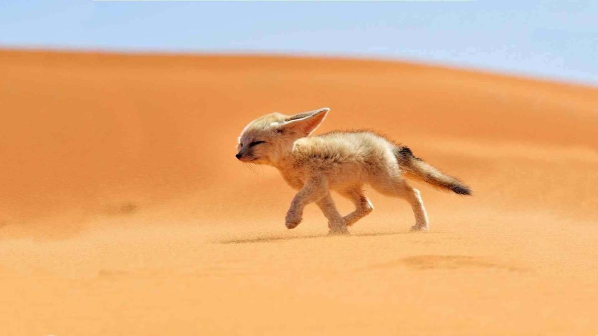 Wildlife In The Desert 4k Wallpaper