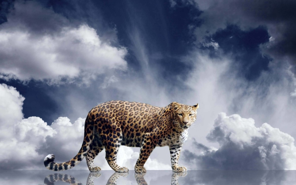 Wonderful Leopard With Clouds In Background 4k Wallpaper