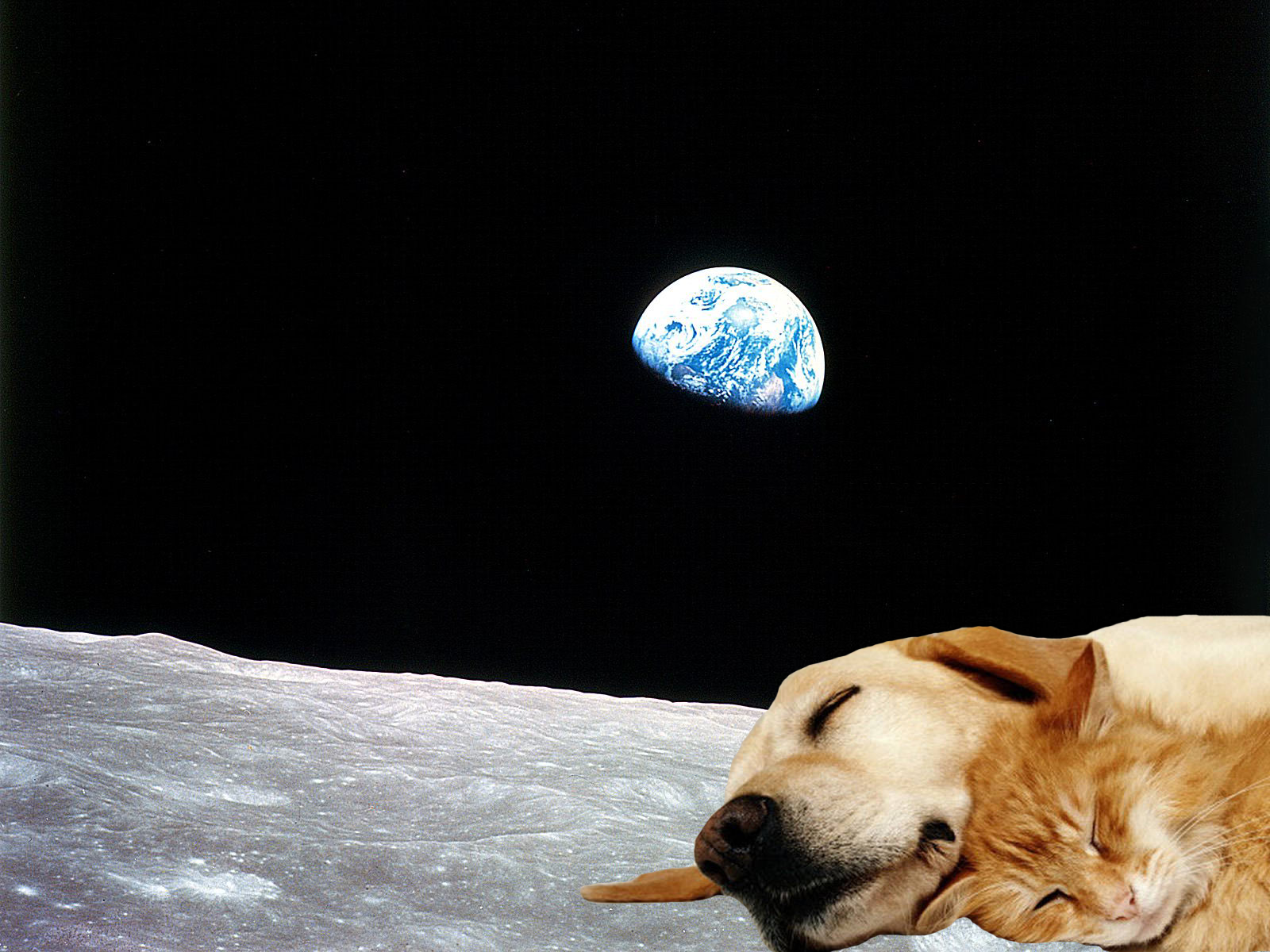 amazing-wallpaper-dog-and-cat-on-the-moon
